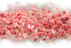 Бутоны цветка рододендрона с бабочками Стоковые Фотографии RF