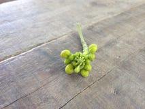 Бутоны цветка Стоковое фото RF