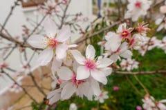Бутоны, цветки и весна Стоковая Фотография RF