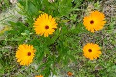 Бутоны, цветки и весна Стоковое фото RF