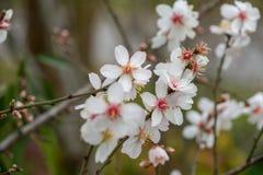 Бутоны, цветки и весна Стоковое Изображение RF