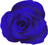 Бутон голубых роз, вектор Стоковая Фотография