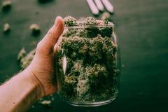 Бутон конусов марихуаны цветет конопля в руке тона черноты человека унылого зеленого стоковая фотография