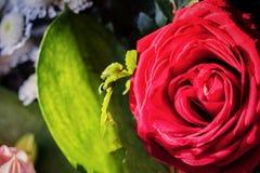 Бутон красной розы в букете Стоковое фото RF