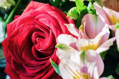 Бутон красной розы в букете Стоковые Фотографии RF