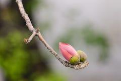 Бутон цветка капка Стоковая Фотография