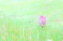 Бутон цветка лотоса Стоковые Изображения