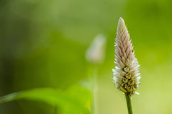 Бутон цветка с зеленой предпосылкой bokeh Стоковые Изображения