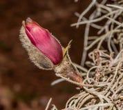 Бутон цветка Стоковые Изображения