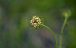 Бутон цветка стоковое фото