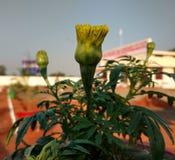 Бутон цветков Стоковые Фото