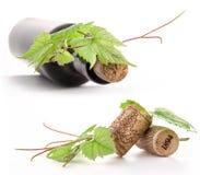 Бутылка вина, пробочки и листьев лозы Стоковое фото RF