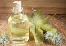 Бутылка касторового масла с плодоовощами рицинуса, семенами и лист - Ricinus communis стоковые изображения