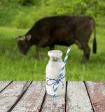 Бутылка молока с striped соломой Молоко ` s коровы обозревая луг Стоковая Фотография RF