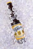Бутылка пива Виктории в льде Стоковые Фотографии RF