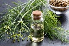 Бутылка эфирного масла фенхеля с свежими верхними частями и семенем фенхеля Стоковая Фотография
