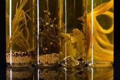 Бутылки оливкового масла с warious специями Стоковые Фото