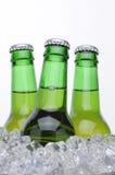 бутылки пива bucket льдед 3 Стоковое фото RF