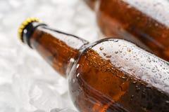 Бутылки свежего пива на льде, Стоковые Фотографии RF