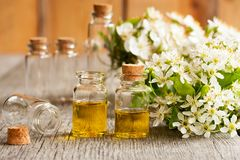Бутылки эфирного масла с белыми цветениями на деревянном столе Стоковая Фотография