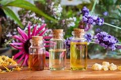 Бутылки эфирного масла с calendula, ладаном, эхинацеей Стоковые Изображения