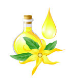 Бутылка с ylang ylang масла бесплатная иллюстрация