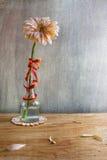 Бутылка gerbera натюрморта белая Стоковые Фото