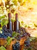 Бутылки вина без ярлыка Стоковая Фотография RF