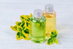 Бутылки естественных геля и шампуня ливня с заводами Стоковая Фотография RF