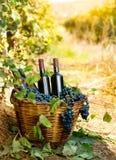 Бутылки красного вина и виноградин в корзине Стоковая Фотография RF