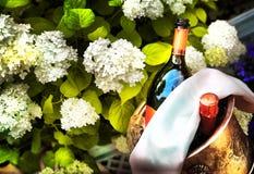 Бутылки красного вина Expencive охлаждают в серебряной пряжке в expe Стоковые Фото