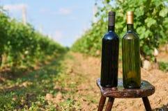 Бутылки лозы без пустого ярлыка Стоковое Фото