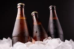 Бутылки пива в кубах льда Стоковое Изображение RF