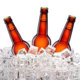 Бутылки пива в льде Стоковое Изображение