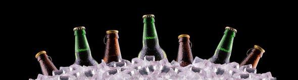 Бутылки пива на льде Стоковое фото RF