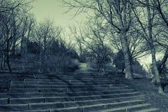 Бухарест, Румыния, парк Tineretului Стоковые Фотографии RF