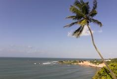 Бухта дельфинов - натальные пляжи Бразилии стоковая фотография