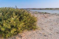 Буш вдоль дороги пустыни Namibe anisette Стоковое Фото