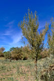 Буш в пустыне Стоковое фото RF