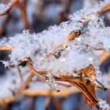 Буш в снежке Стоковое Изображение