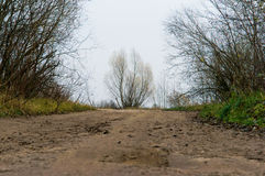 Буш, дерево, природа стоковое изображение rf
