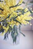 Буш желтой мимозы в стеклянной вазе на свете - голубой предпосылке Стоковое Фото