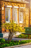Буш желтого forsythia цветет против стены с окном и стендом Стоковые Изображения RF
