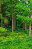 Буш и дерево Стоковое фото RF