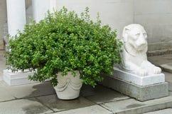 Буш и статуя Стоковые Изображения