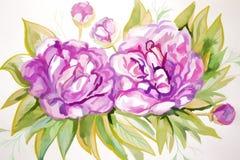 Буш красивых розовых пионов Стоковое Фото