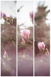 Буш магнолии в саде против детенышей весны цветка принципиальной схемы предпосылки белых желтых Стоковые Фото
