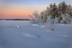 Буш на замороженном озере на заходе солнца Стоковая Фотография RF