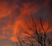 Буш на заходе солнца Стоковые Изображения