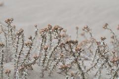 Буш на песке Стоковое Изображение